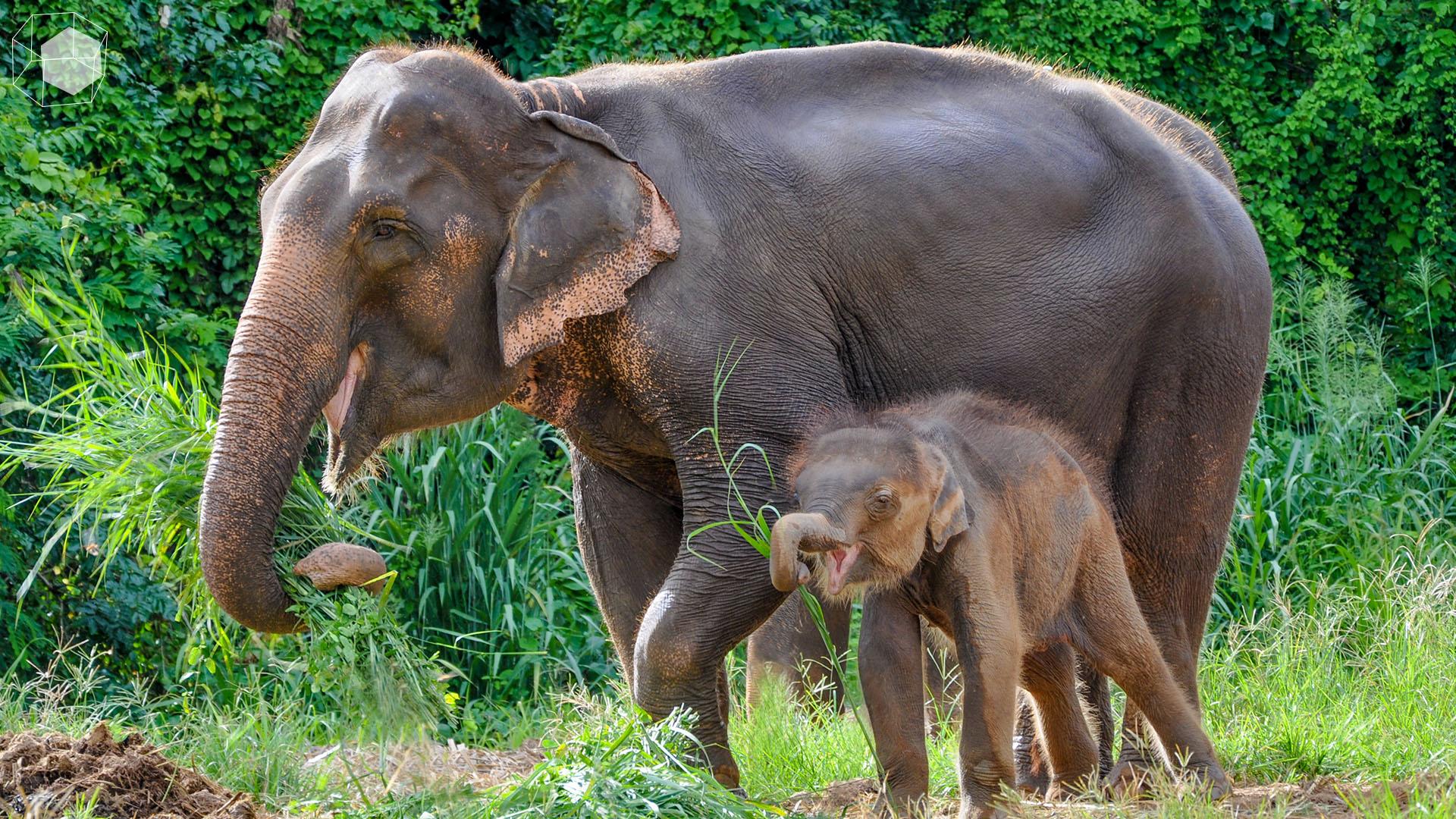 ที่เที่ยวขี่ช้าง